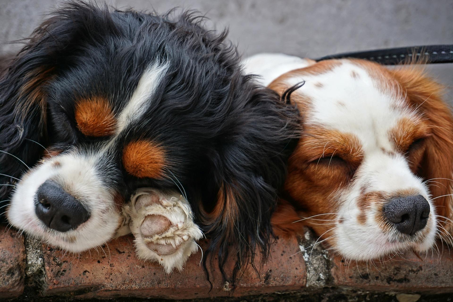 疲れを取る最高の睡眠